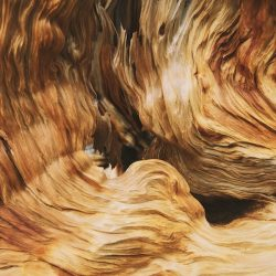 gnarled-wood-inner-texture-1-600