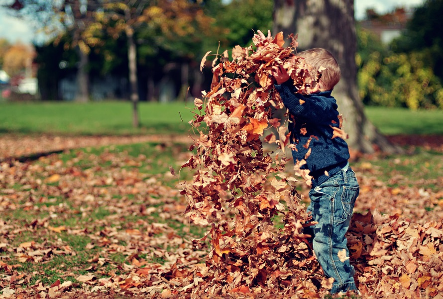child-in-leaves